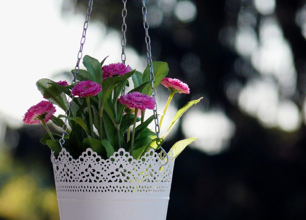 Kupiłam Białe Doniczki Na Kwiaty I Co Dalej Podglądamy