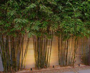 bambus w ogrodzie podswietlony